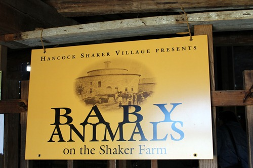 baby animals sign