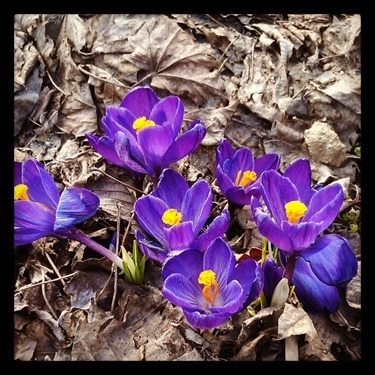 First_flowers_of_the_season_
