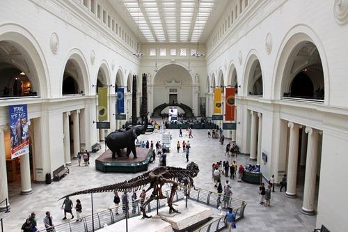 field museum main gallery