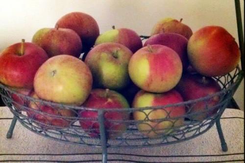 Highlights: Apples and Pumpkins