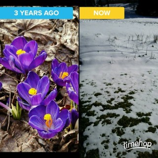 flowers-vs-snow.jpg