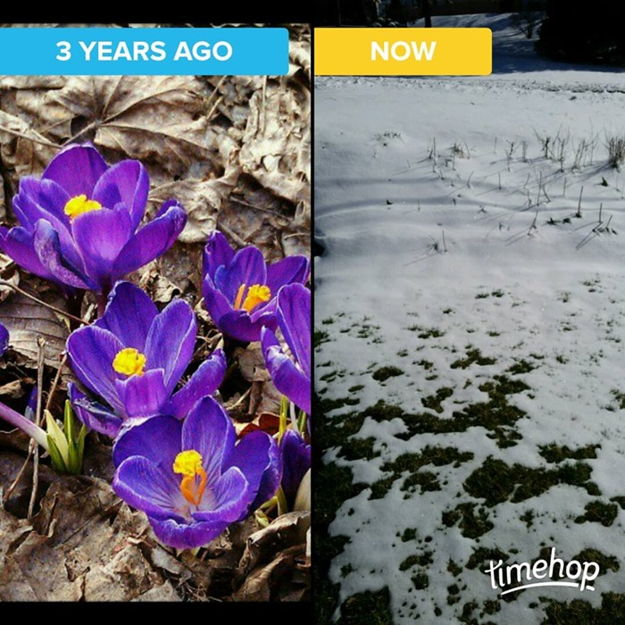 flowers vs snow