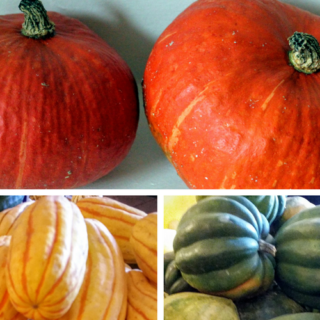 squash-collage.png